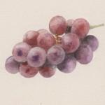 「葡萄」カット