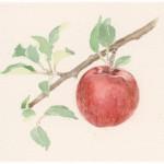 「林檎」カット